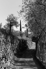 Liguria (fabiolug) Tags: road trees tree street noli liguria ligury italia italy leicammonochrom mmonochrom monochrom leicamonochrom leica leicam rangefinder blackandwhite blackwhite bw monochrome biancoenero 35mmsummicronasph 35mmf2summicronasph summicronm35mmf2asph summicron35mmf2asph 35mm summicron leicasummicron leica35mm