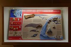 Muzeum w Rezerwacie Narodowym Paracas | The Musem in Paracas National Reserve