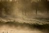 Hare in the Morning Light (Charlene van Koesveld) Tags: mist tree trees dawn hare rabbit sunrise fog morning spring water nature dew sun sunlight light animals animal beautiful golden grass holland rays wildlife bunny wild dutch goldenhour netherlands nederland landscape serene