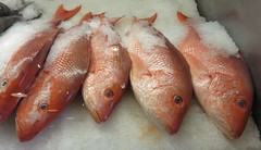 Safe Harbor Seafood Market and Restaurant Red Snapper (Atlantic Beach, Florida) (courthouselover) Tags: florida fl duvalcounty jacksonville mayport meals animals fish redsnapper atlanticbeach jacksonvillemetropolitanarea northamerica unitedstates us
