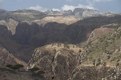 yem_1450 (Peter Hessel) Tags: yemen socotra soqotra jemen wadidhar dragonbloodtree dracaenacinnabari diksamplateau
