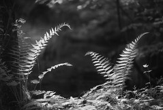 Poolside (Russ Barnes Photography) Tags: blackandwhite fern mono spring nikon monochromatic infrared backwater d800 720nm russbarnes zeiss100mmf2zf2