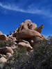 Joshua Tree Pile of Rocks (J Swanstrom (Never enough time...)) Tags: blue sky tree kodak joshua dx7590 jswanstromphotography
