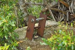 tie down (the feral man) Tags: nature natural florida dryprairie kissimmeeprairie staeparks kissimmeeprairiepreservestatepark