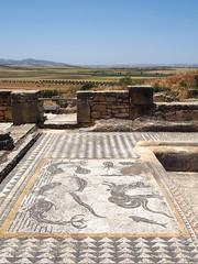 P5261334 (lnewman333) Tags: africa ancient northafrica mosaic historic worldheritagesite morocco fez maroc maghreb fes volubilis romanruins unescosite 1stcenturyad