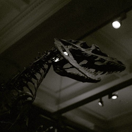 Jurassic Park 4  #jurassicpark #dinosaur #museum #kelvingrovemuseum #film #filmneverdie #fossil