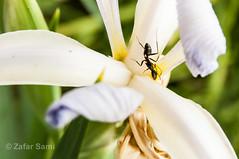 20150419-ZAS_8890 (zafarsami65) Tags: flowers farm ants islamabad