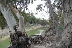 Darling River - Kinchega National Park (iansand) Tags: darlingriver menindee kinchega