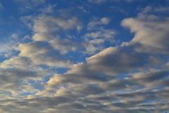 Easter Dawn Service Watsons Bay 2015 036