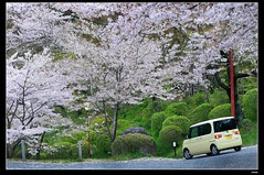 nEO_IMG_DP1U3764 (c0466art) Tags: park old trip travel flowers light green castle pool beautiful japan canon season spring scenery afternoon bloom sakura 2015 trres 1dx c0466art