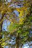 IMG57833UpsideDowna_C (Kernowfile) Tags: ruffordoldhall rufford trees autumn plants flowers heritage gardens water canal ducks apples halloween