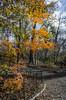 _DSC4607 (purin_cess) Tags: centralpark 2016 autumn 11月 十一月 秋 中央公園 紐約 ny newyork