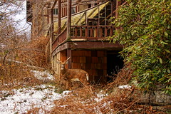Hiding In Plain Sight (thetrick113) Tags: abandoned ulstercountynewyork newyorkstate hudsonvalley hudsonrivervalley shawangunkridge shawangunk shawangunkmountains whitetaildeer whitetail deer whitetaildeerbuck buck antlers sonyslta65v fall lateautumn autumn 2016 autumn2016 snow hidinginplainsight hdr