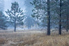 Meadow Mist (Kirk Lougheed) Tags: california elcapitanmeadow usa unitedstates yosemite yosemitenationalpark yosemitevalley autumn fall fog grass landscape meadow mist morning nationalpark outdoor plant sky tree
