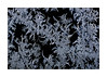 The Jewels On The Window (paulinecurrey) Tags: blackcard frost window macro amazing art creative nature jewels frosty frozen natural cold ice icy england horley canon digital pattern