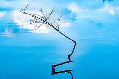 The sky is the limit... (dlorenz69) Tags: buckow lake freedom see baum tree sky himmel growth freiheit nature destiny schicksal natur standpunkt clouds wolken luft air blue blau frei free