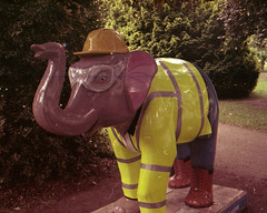 builder elephant (pho-Tony) Tags: nikonf401 kodak color plus 200 kodakcolorplus exhausted thin underdeveloped rollei digibase c41 negative nikon f401 nikkor 3570mm 35mm70mm zoom zoomnikkor autofocus 35mm 135 moterdrive n4004 nikonn4004 consumer 1987 budget film slr singlelensreflex