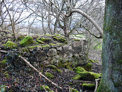 Ruins Above Pontnewydd Golf Links, Cwmbran 4 January 2017 (Cold War Warrior) Tags: ruins pontnewydd cwmbran cistercians