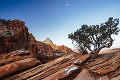 rocky inclinations (almostsummersky) Tags: rockformation snowfall sunrise winter overlook canyon dawn moon orange red morning canyonoverlooktrail tree travel zion sky snow utah bridgemountain nationalpark hurricane unitedstates us
