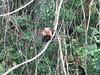 IMG_8996 (dstylebda) Tags: colonpanama gatunlake tamarins howlermonkeys sloth