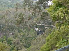 Twin falls, Springbrook National Park P1020261 (benhosg) Tags: waterfall springbrooknationalpark