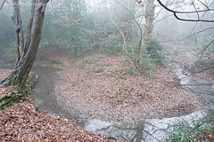 Murky Meander (  Voiceb[ ]x Photography  ) Tags: woodland sonya6000 ilce6000 meander river woods misty fog tree wood reflection creepy branches adamvoice sony leaves leaf green brown water slow chill foliage curve edge down look overview white murky mistiness damp light dew unclear opaque cloudy hazy overcast bleary 16mm outside fresh iso3200