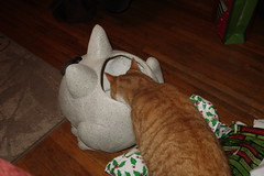 Ziggy Cat - Christmas Eve Play 12-24-16 06 (anothertom) Tags: cats ziggycat gingercat christmaseve play funnycat 2016 sonyrx100ii