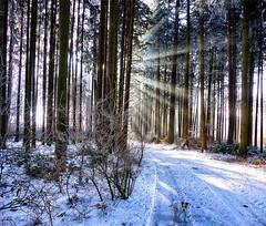 Anton (Oliver Kuehne) Tags: anton jackrussellterrier jrt sonyrx100ii allgäu bayern bavaria germany hund dog chien snow schnee winter hiver icy frost