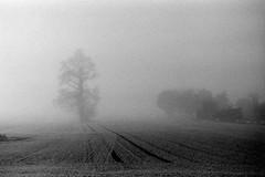 The great mystery. (von8itchfisk) Tags: tree mist suffolk east anglia blackandwhite monochrome silver film 35mm 50mm kodak olympus om10 von bitchfisk