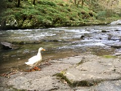 Watersmeet (HighcliffExmoor) Tags: watersmeet lynton exmoor northdevon