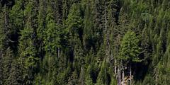 _K3_6149 (Aaron Studer) Tags: switzerland valais vercorin vallonderchy