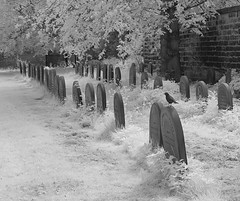 Rest in peace (Thrift) Tags: trees cemetery graveyard ir peace graves infrared darlington blackbird quaker quakergraveyard