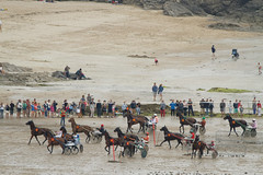 Trot Marin (FrT-eclairage) Tags: horse cheval marin bretagne trot chevaux sulky lancieux hypodrome