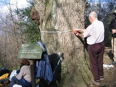 """Roure de Santa Maria del Montnegre - L'especialista Enric Orús mesurant el canó febrer 2004 <a style=""""margin-left:10px; font-size:0.8em;"""" href=""""http://www.flickr.com/photos/134196373@N08/19659619904/"""" target=""""_blank"""">@flickr</a>"""