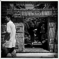 stripes (Albion Harrison-Naish) Tags: sydney streetphotography australia newsouthwales unedited iphone sydneycity mobilephotography theroyalbotanicgardens iphoneography sydneystreetphotography hipstamatic aobwfilm iphone5s lowylens albionharrisonnaish