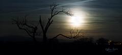 Moonrise over Forton Lancashire (NDSD) Tags: sunset dusk sun light blue orange moon sky yellow night dawn nature landscape explore green summer view northern england north uk dark forton preston lancashire west astronomy tree winter services motorway bowland
