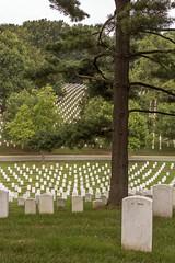 CN4A0203 - Arlington National Cemetery (Syed HJ) Tags: canoneos5dmarkiii canoneos5diii canon5diii canon 5d 5diii canonef70200mmf28lisiiusm canonef70200mmf28lisii canonef70200mmf28l canonef70200mm canon70200mm 70200mm arlingtonnationalcemeteryarlingtonva arlingtonnationalcemetery arlingtonva cemetery arlington va graveyard gravestones