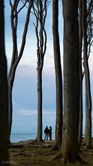 Try for the Sky (Collin Key) Tags: beechtrees trees gespensterwald ostsee balticsea buchen spookyforest coast landscape dusk nienhagen mecklenburgvorpommern deutschland de
