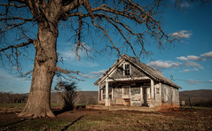 Out to Pasture. (Mr. Pick) Tags: house abandoned farm tree pasture rural decay tn tennessee viola