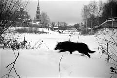 Сергиев Посад, декабрь 2016 (стров) Tags: смена smena littledoglaughednoiret artlibres