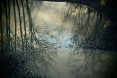 054 (bluefootedbooby) Tags: pozzanghera puddle flaque charco