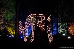 Rudolph im Zauberwald (Sockenhummel) Tags: botanischergarten botanischergartenberlin christmasgarden christmasgardenberlin fuji x30 fujifilm finepix fujix30 winter weihnachten nachts night zauberwald rudolph rentier reindeer christmas berlin