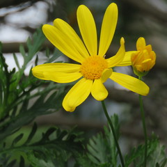 IMG_4873 (jesust793) Tags: flowers flores macro