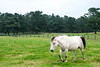 SX162203 (Daegeon Shin) Tags: fujifilm xpro2 fujinon 55200 xf55200 jeju horse caballo pasture apacentadero animal 후지필름 후지논 corea korea 제주도 말 목장 동물