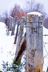 Corner post (Jamie McCaffrey) Tags: barbedwire canada fence fuji fujifilm ontario purdy purdylake snow snowfall winter xt1