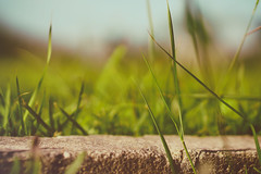 Simple Days (ricdovalle) Tags: dia day verde green grama grass sony alpha a6000 sel50f18 50mm ilce6000
