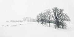 snow flurry (++sepp++) Tags: bayern deutschland landscape landschaft landschaftsfotografie lechfeld schnee winter graben de bavaria germany snow monochrom bw blackwhite sw schwarzweis einfarbig bäume trees schneefall snowflurry schneegestöber highkey
