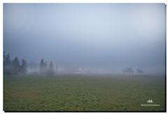 JANUARY 2017-020260-22 (Nick and Karen Munroe) Tags: nikon nikond750 nickandkarenmunroe nickmunroe nature nickandkaren karenick23 karenick karenandnickmunroe karenmunroe karenandnick munroedesignsphotography munroedesigns munroephotography munroe brampton beauty beautiful blue green mist misty fog foggy weather winter winterfog ontario canada dawn sunrise morning nikon2470f28