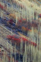 Climate of Himalayas (Zahoor-Salmi) Tags: zahoorsalmi salmi wildlife pakistan wwf nature natural canon birds watch animals bbc flickr google discovery chanals tv lens camera 7d mark 2 beutty photo macro action walpapers bhalwal punjab