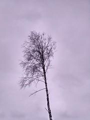И слушал молчание в тишине леса..